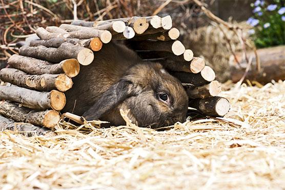 rabbit-tunnel